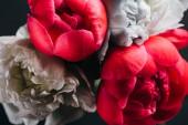 kytice mokré růžové a modré pivoňky izolované na černé, zblízka pohled