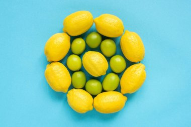 Top view of ripe yellow lemons and limes arranged in circles on blue background stock vector