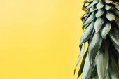 grüne Ananasblätter isoliert auf gelbem Hintergrund