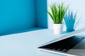 modern laptop on blue workplace with green plant