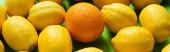 fresh ripe yellow lemons and orange on green background, panoramic crop