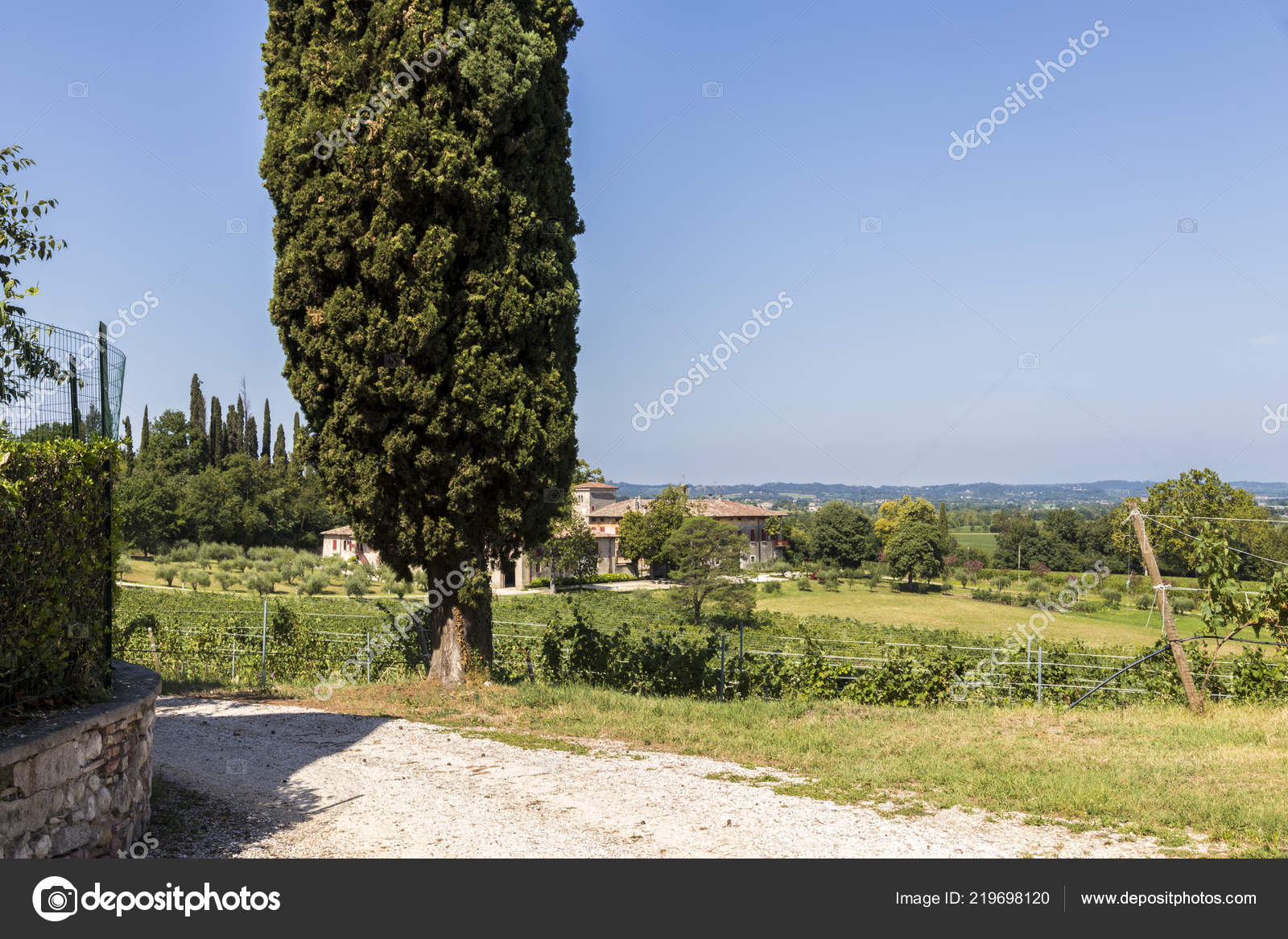 Typical Italian Landscape Cypress Estate Vineyard San Martino