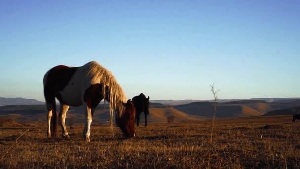 Na louce se pasou koně