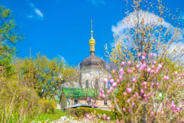 Wonderful magnolia flowers, Trinity Monastery of St. Jonas, M. Hryshko National Botanical Garden, Kyiv (Ukraine)