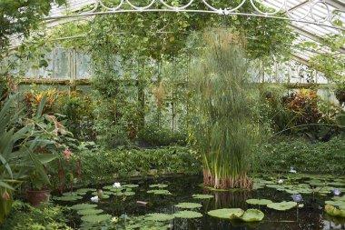 London, United Kingdom - August 26, 2017 : Kew Gardens