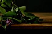 Detailní záběr větve fialovými květy a listy na dřevěný povrch izolován na černém