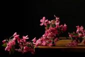 Fotografie Nahaufnahme der Rosa Kirschblüte auf hölzernen Tischplatte liegend