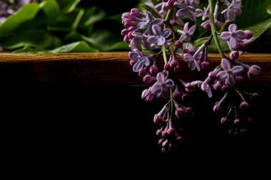 close-up shot of spring lilac flowers on wooden table isolated on black