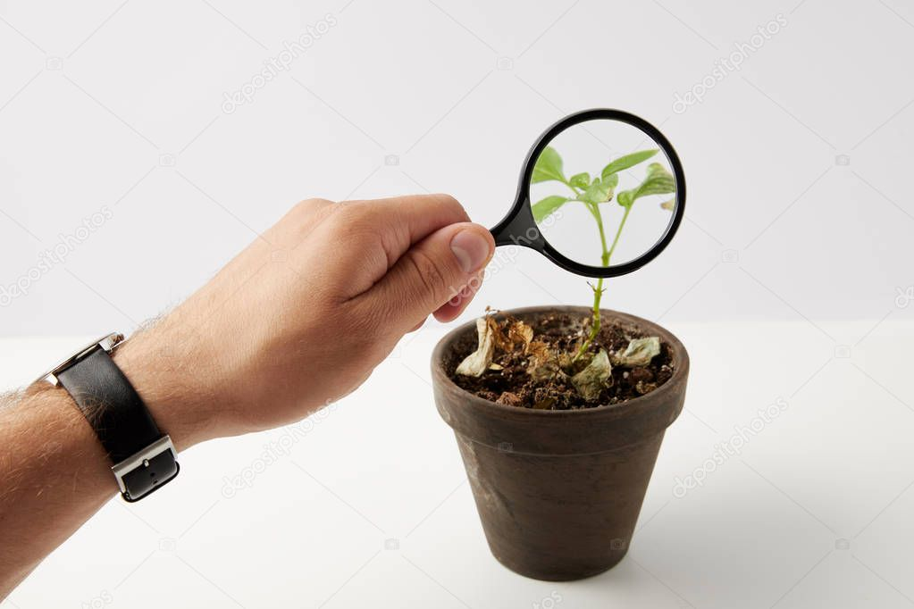 partial view of person holding magnifying glass and green plant in pot on grey