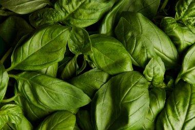 full frame shot of ripe green basil for background