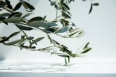 Fotografie close up view of olive branches over white surface with shadow of leaves