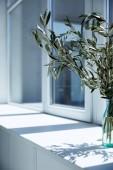 Detailní pohled láhve s olivové ratolesti na okenním parapetu se stínem