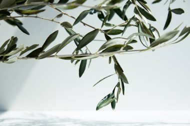 close up view of olive branches in front of white wall with shadow