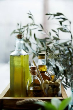 glass with spoon and green olives, bottles of aromatic olive oil with and branches on wooden tray