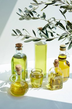 Various bottles of aromatic olive oil, branches and jar on white table stock vector