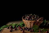 freshly harvested cherries in rustic basket with leaves on wooden table and on black