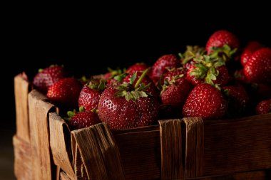 close-up shot of ripe strawberries in box isolated on black