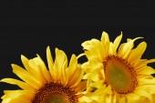 Fotografie krásná kytice s žluté slunečnice, izolované na černém pozadí