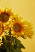Fotografie decorative bouquet with beautiful sunflowers, isolated on yellow