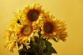 Fotografie bouquet with orange beautiful sunflowers, isolated on yellow