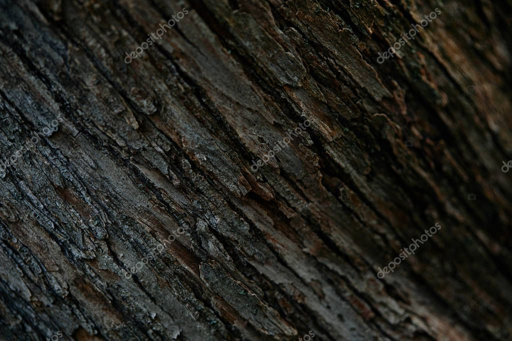 full frame image of tree bark background