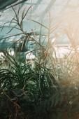 Selektivní fokus ze zelených rostlin listy slunečním záření