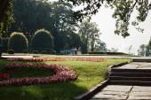 Fotografie malebný pohled letní park se stromy a květinami během dne