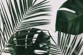 zelené palmy a monstera listy na bílý povrch