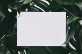 Photo top view of green monstera leaves with white copy space