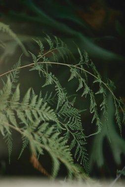 """Картина, постер, плакат, фотообои """"селективное фокусирование ветвей с зелеными листьями кипариса на размытом фоне постеры плакаты"""", артикул 206390928"""