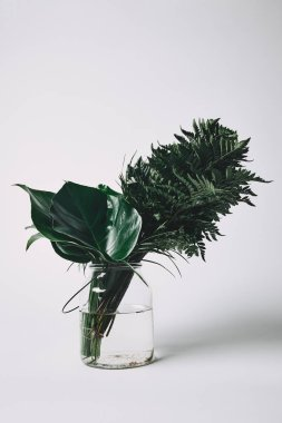 bunch of various green leaves in glass vase on white
