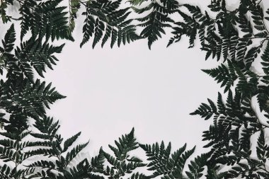 top view of green fern leaves frame isolated on white