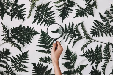 cropped shot of woman holding magnifying glass over green fern leaves isolated on white