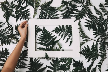 cropped shot of woman holding frame over fern leaves on white
