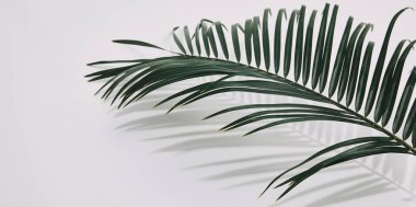 close-up shot of palm branch over white tabletop
