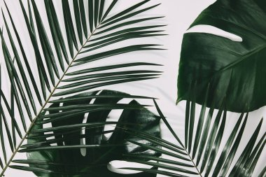 green palm and monstera leaves on white surface