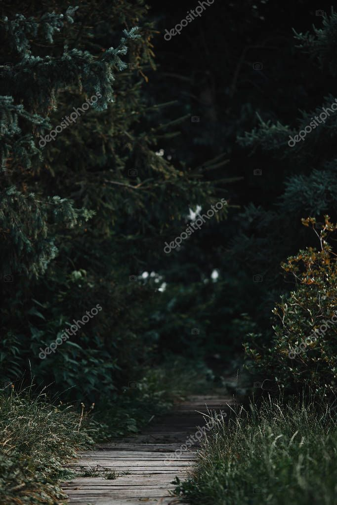 selective focus of wooden path between green trees in forest
