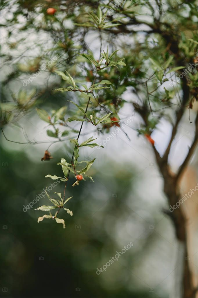 selective focus of branch of tree with green leaves on blurred background
