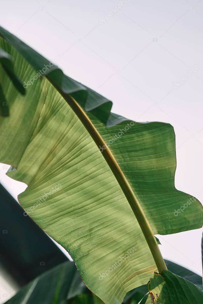 close up view of green tropical leaf under sunlight outdoors