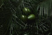 close-up view of beautiful green tropical leaves and fresh avocados