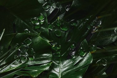 close-up view of beautiful green wet tropical leaves and ice cubes