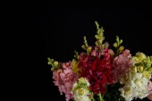 Fotografie bouquet of beautiful various decorative gladioli flowers with buds isolated on black background