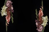 Fotografie beautiful tender pink, yellow and purple gladioli flowers isolated on black background