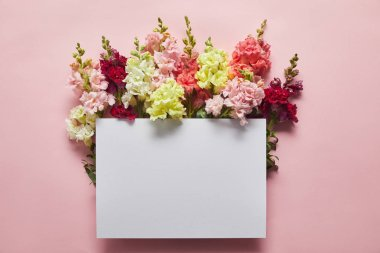 Top view of beautiful tender fresh flowers and blank card on pink stock vector