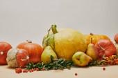 podzimní dekorace s dýně, pyracantha jahody, hrušky a zelené listí na stůl