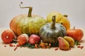 podzimní dekorace dýně, jablko, hrušky a šarlatová bobule na stole