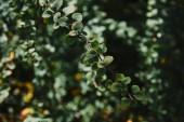 zblízka zelených listů na větvičky s rozmazané pozadí