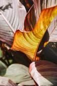 Selektivní fokus krásné fialové listy s slunečního světla v zahradě