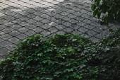 zelené keře a betonová dlažba v zahradě