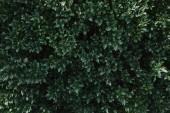 Fotografie zblízka zelených listů keře v zahradě